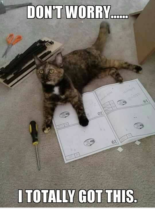Quot Don T Worry Quot Cat Humor Funny Cat Quotes Amp Pics