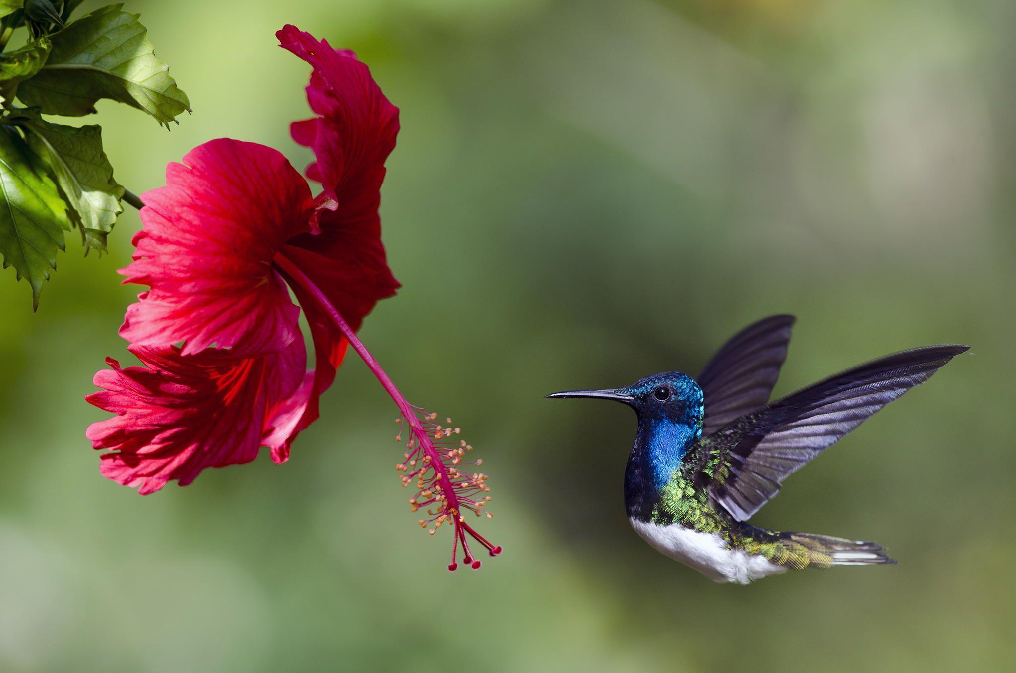 картинки с птичками колибри нравятся