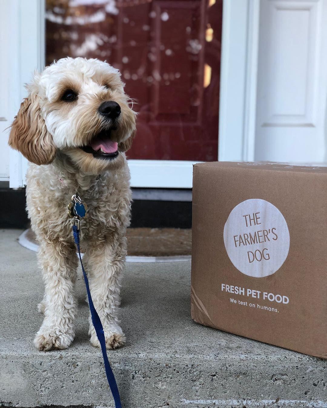 Dog food for mini goldendoodles human grade dog food