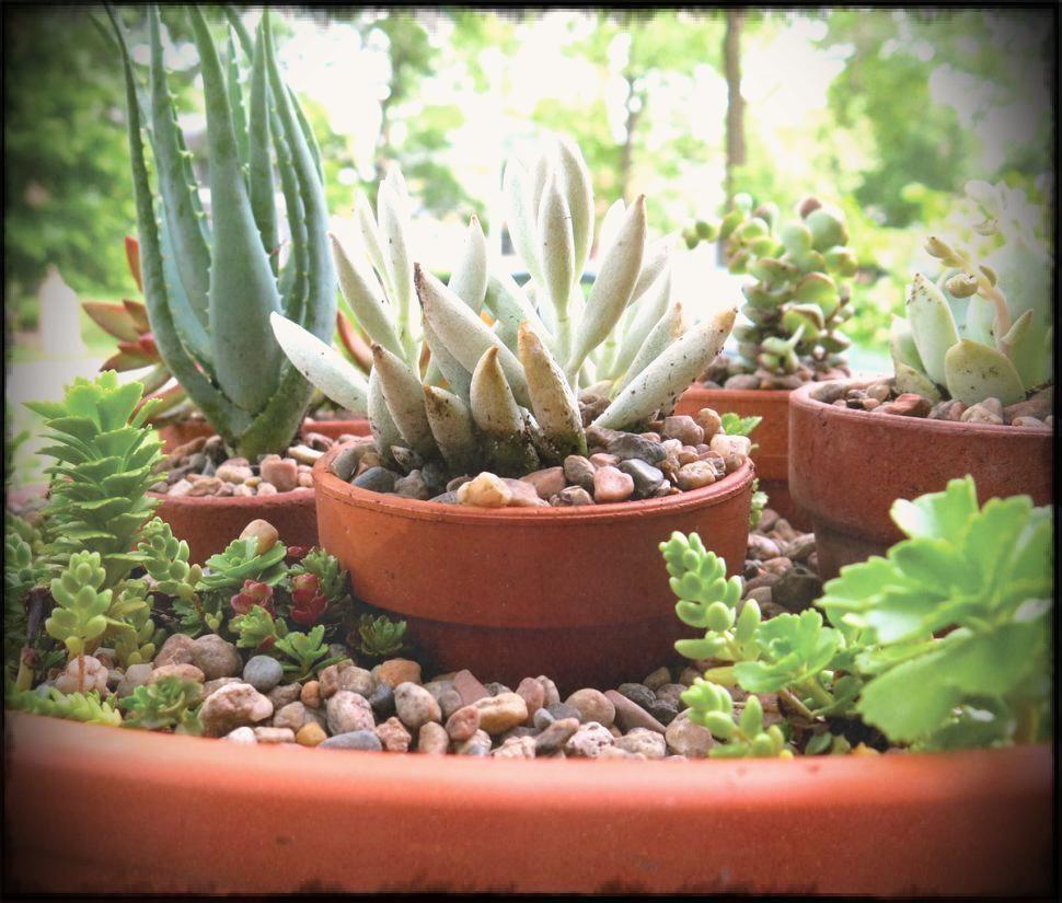 Decoration succulent diy creative plant pots growing succulents in decoration succulent diy creative plant pots growing succulents in containers planting outside cheap unusual flower planters izmirmasajfo