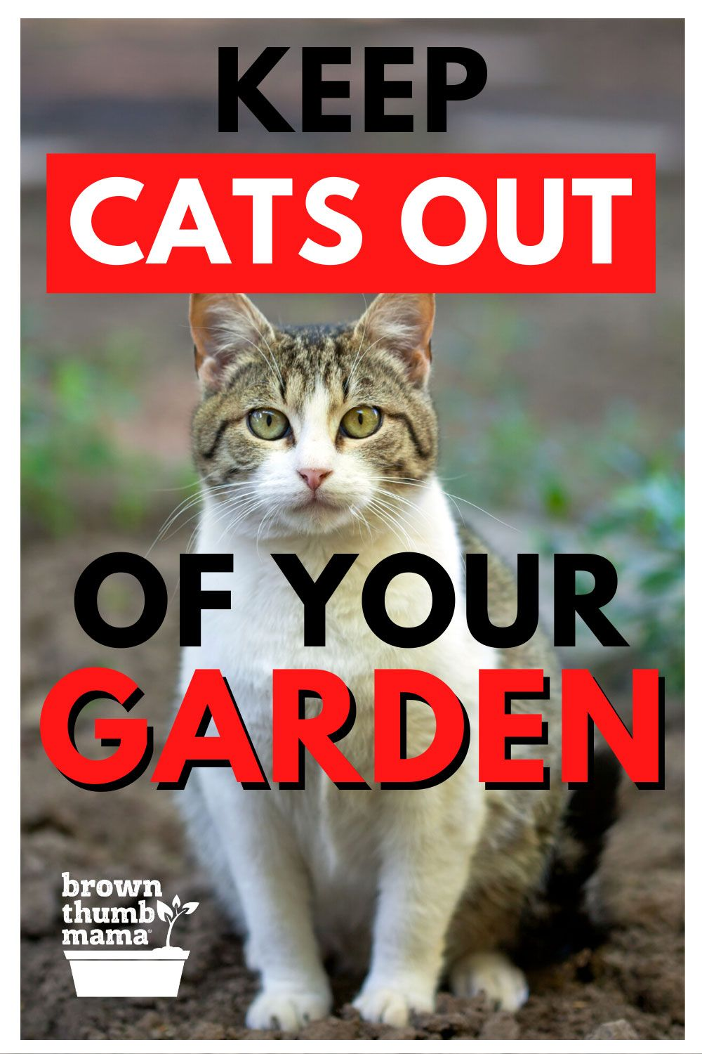 8 Natural Ways to Keep Cats out of Your Garden in 2020 ...
