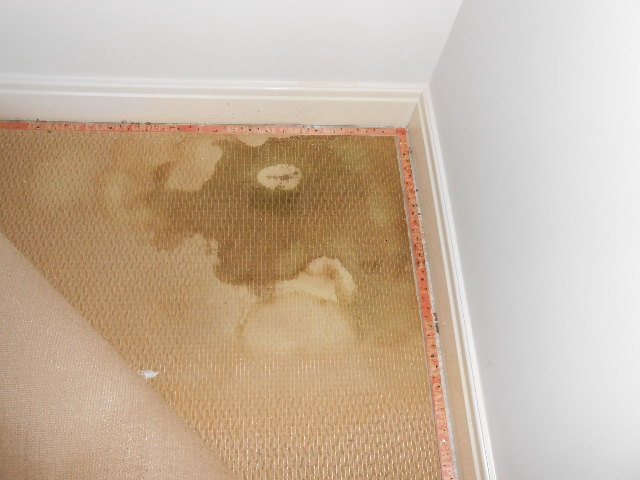 Underlay contaminated with cat urine And they wondered