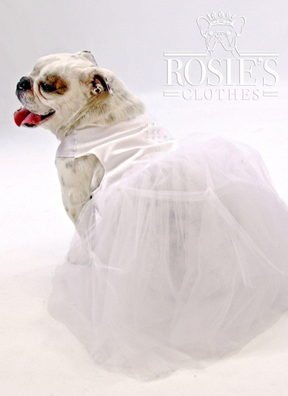White diamonds bridesmaid dress dog english bulldog french white diamonds bridesmaid dress dog english bulldog french bulldog by forrosie on etsy ombrellifo Choice Image