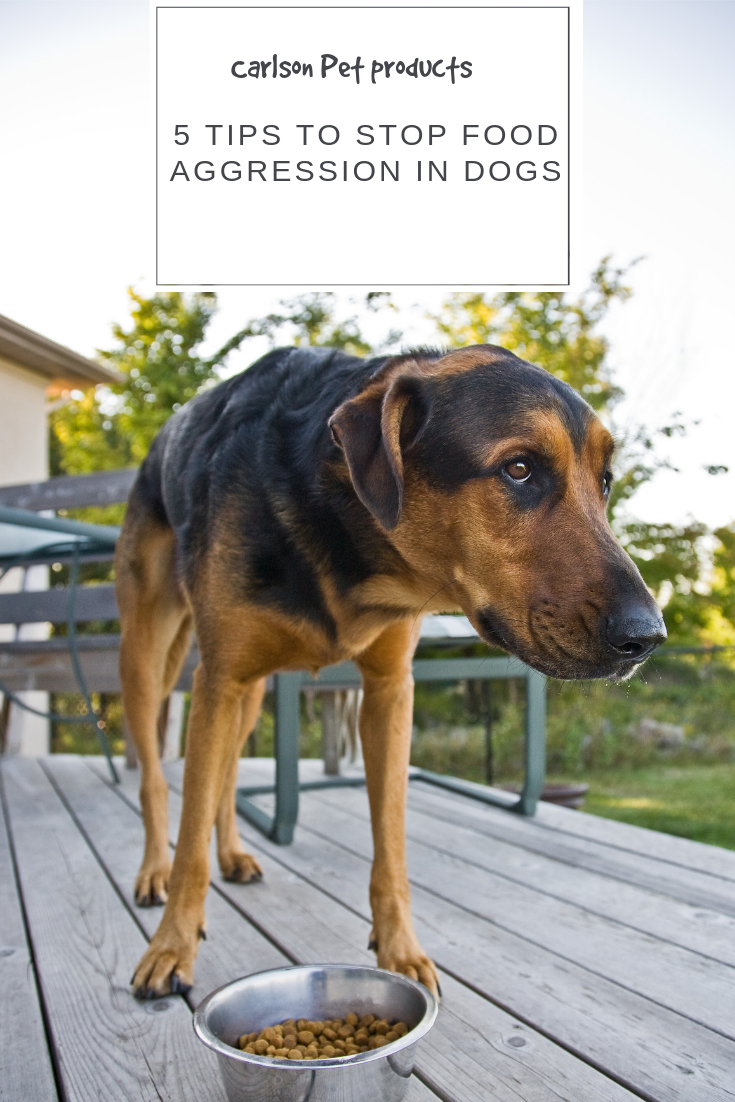 5 Tips to Stop Food Aggression in Dogs   Food aggression ...