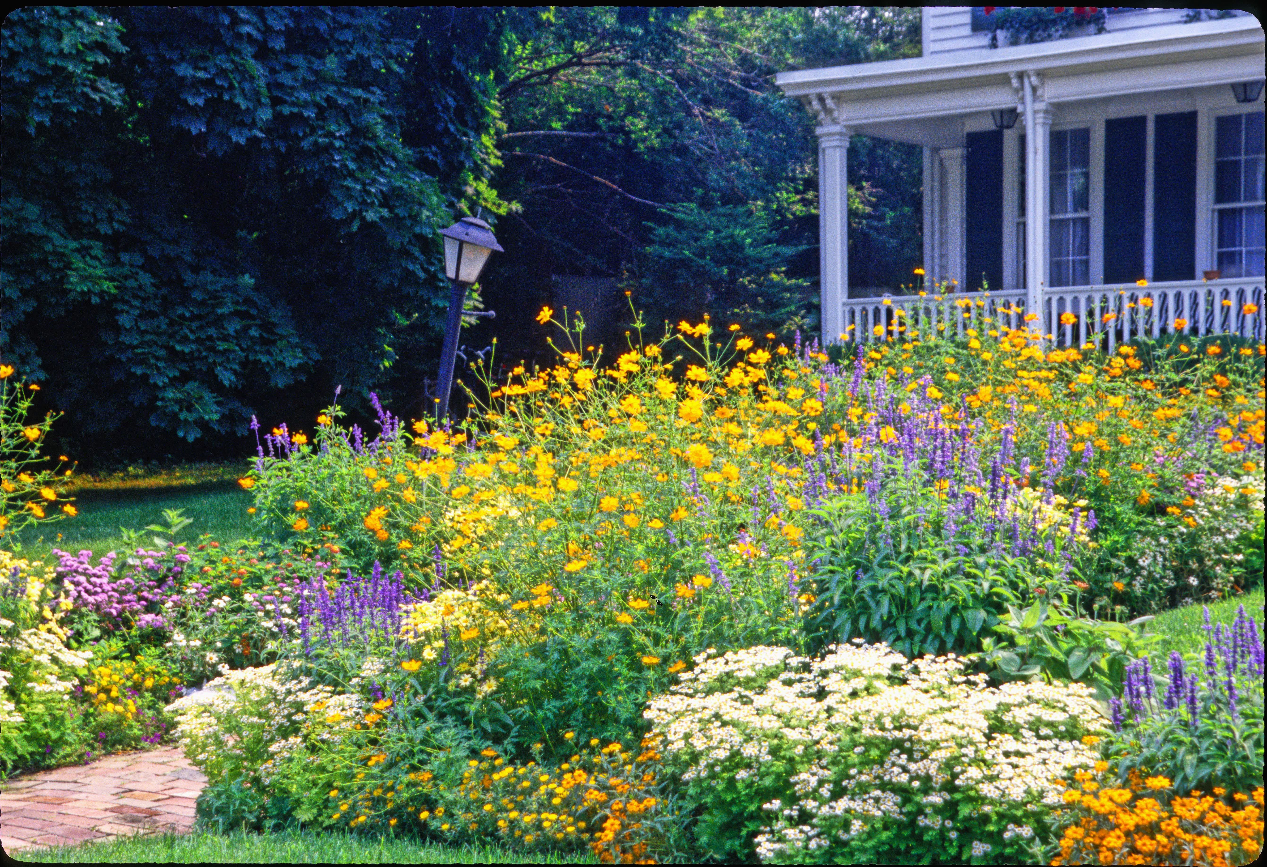 Wildflowers Along House Google Search Front Yard Flowers Front Yard Landscaping Front Yard