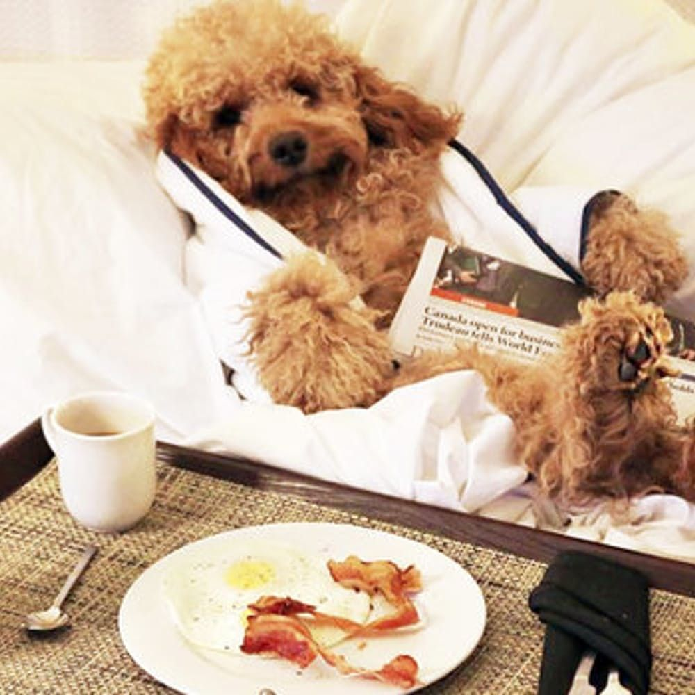 The Best Pet Friendly Hotels For You And Your Non Human Bff With Images Pet Friendly Hotels Dog Friendly Hotels