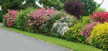 haie fleurie haie pinterest haies fleuri et jardins. Black Bedroom Furniture Sets. Home Design Ideas