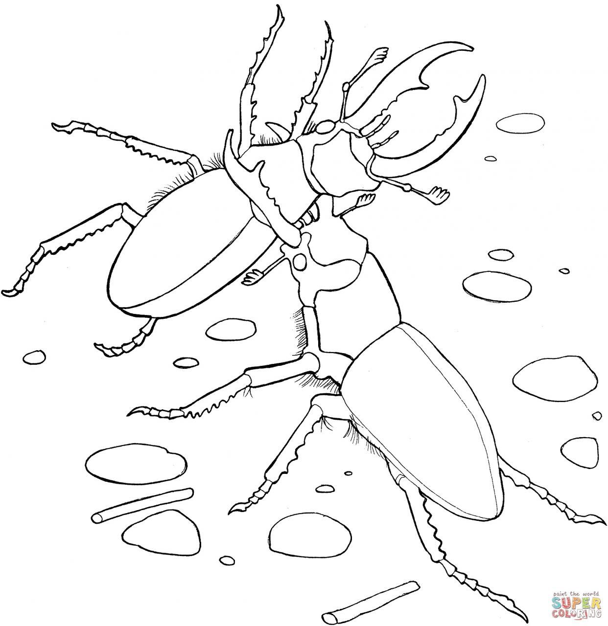 12 Beetle Colouring Pages Hercules Rhino Beetle N Related Beelte