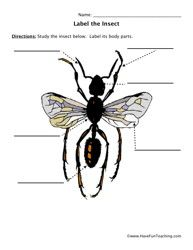 Worksheets Insect Body Parts Worksheet insects and worksheets on pinterest