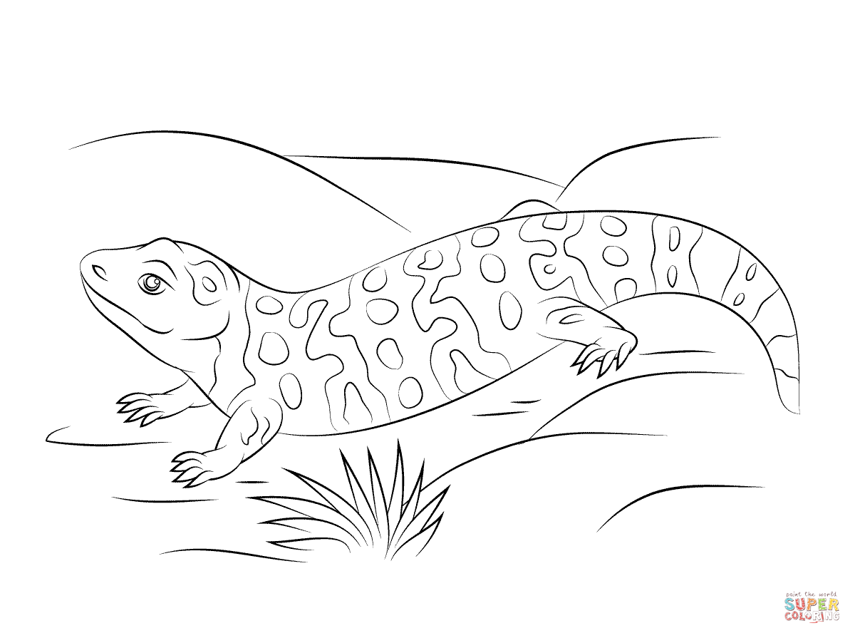 Cute Gila Monster coloring page | Free Printable Coloring Pages ...