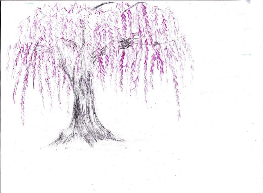 Weeping Cherry Color Sketch By Kosenwing On Deviantart Willow Tree Tattoos Cherry Tree Tattoos Tree Tattoo Side