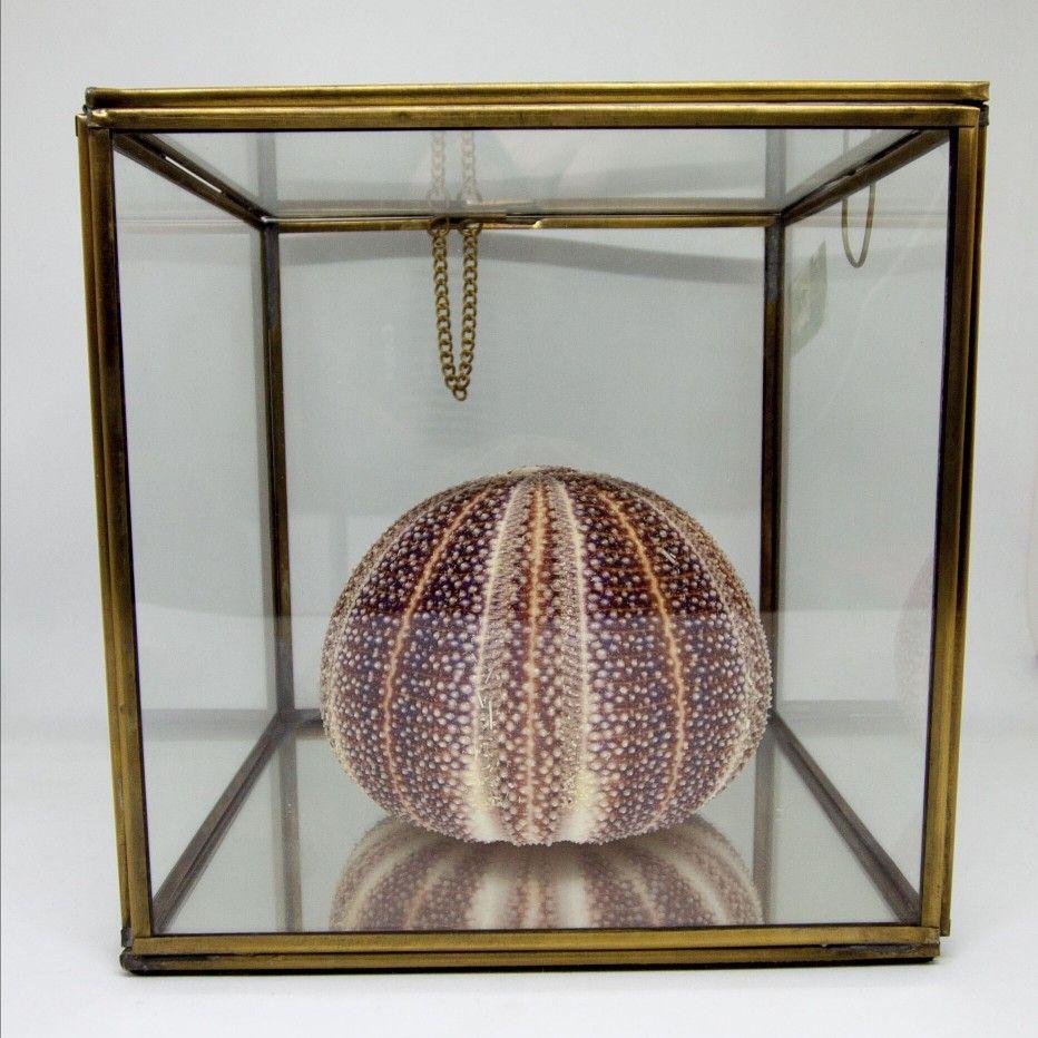 كنز من أعماق البحار.. #redsquare #design #seashell