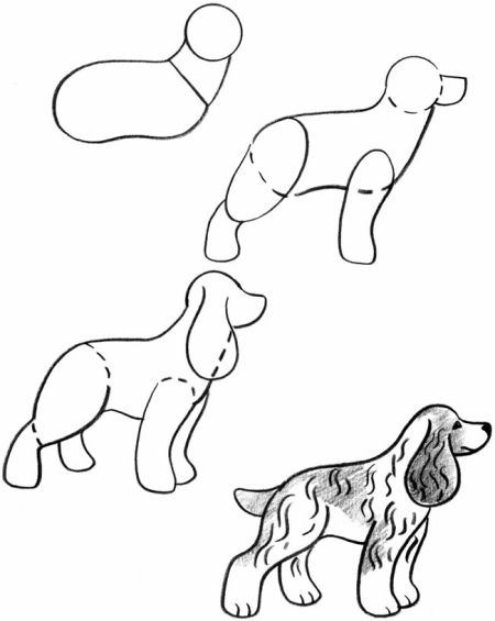 Step By Step Drawing Puppies Cocker Spaniels Are The Smallest