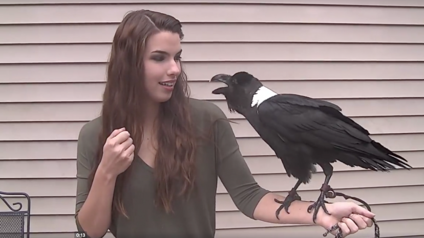 This raven sounds just like a human | UnWind | Crows and