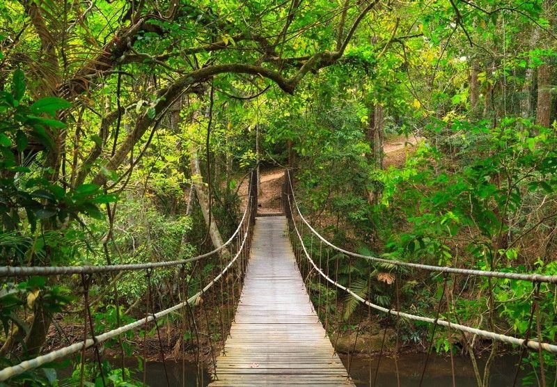 fotobehang brug naar de jungle fotobehang thailand en