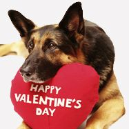 Valentines Doggy Waiting For A Kiss Dog Valentines Valentines