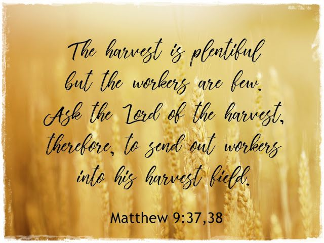 Image result for picture Matthew 9:37-38 Bible