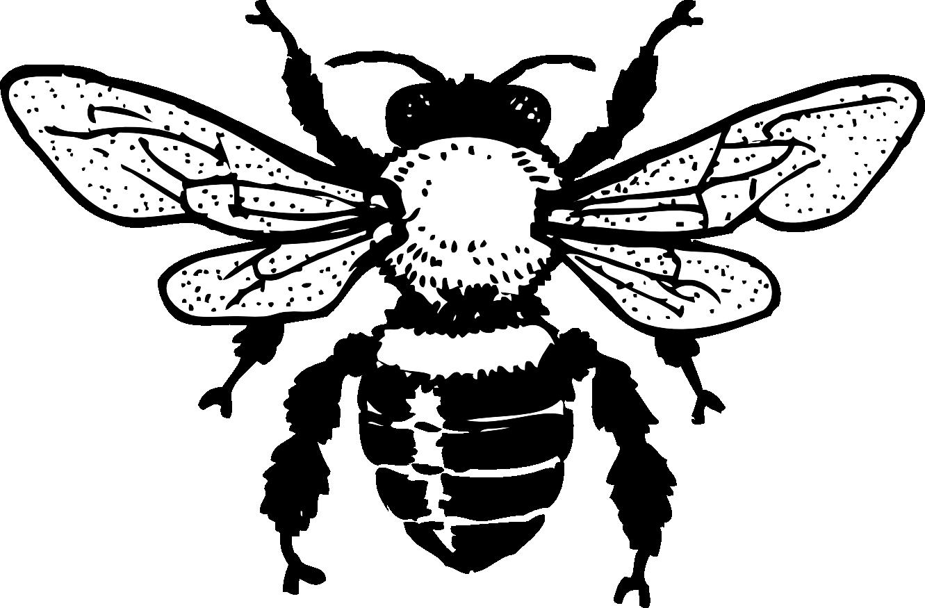 Line Art Bee : Honey bee tattoo design beer label art
