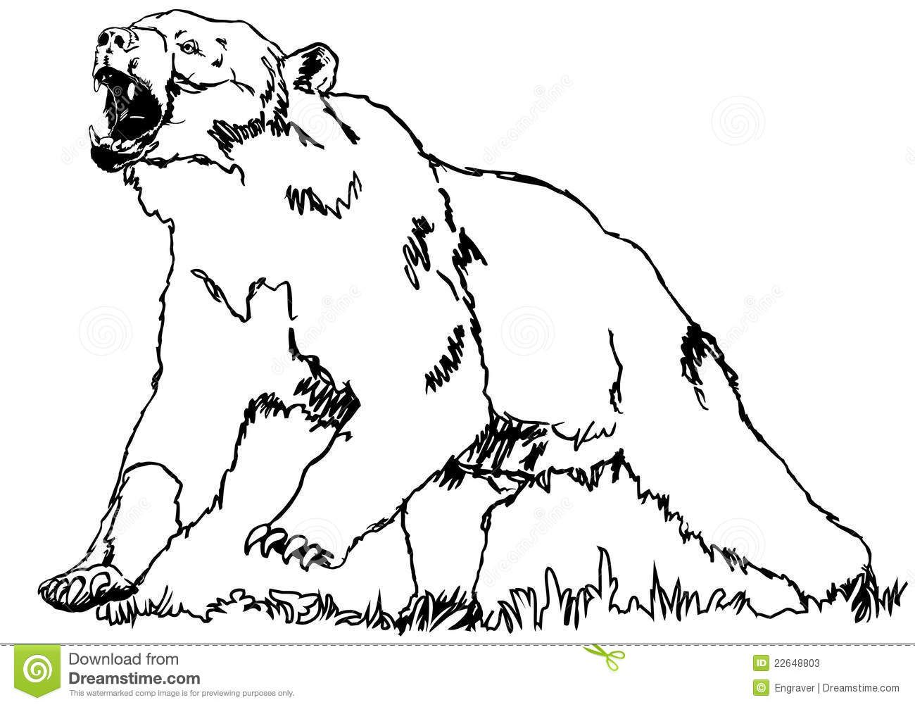 Bear Grizzly Stock Photos - Image: 22648803 | coloring pages | Pinterest