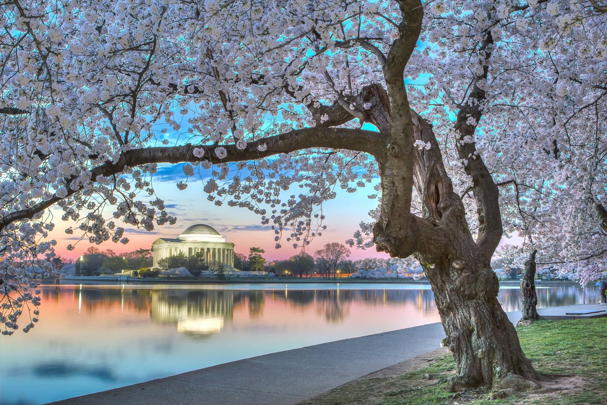 Cherry Blossoms on the National Mall in