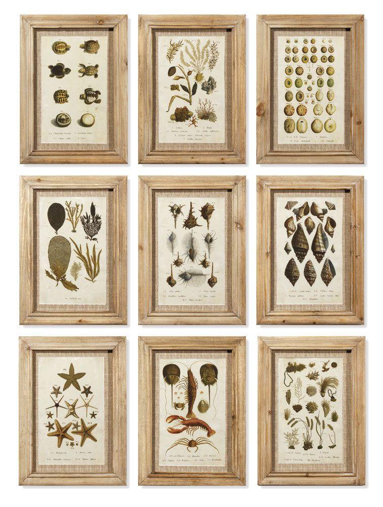 9 Piece Framed Graphic Art Set Wall prints, Garden frame
