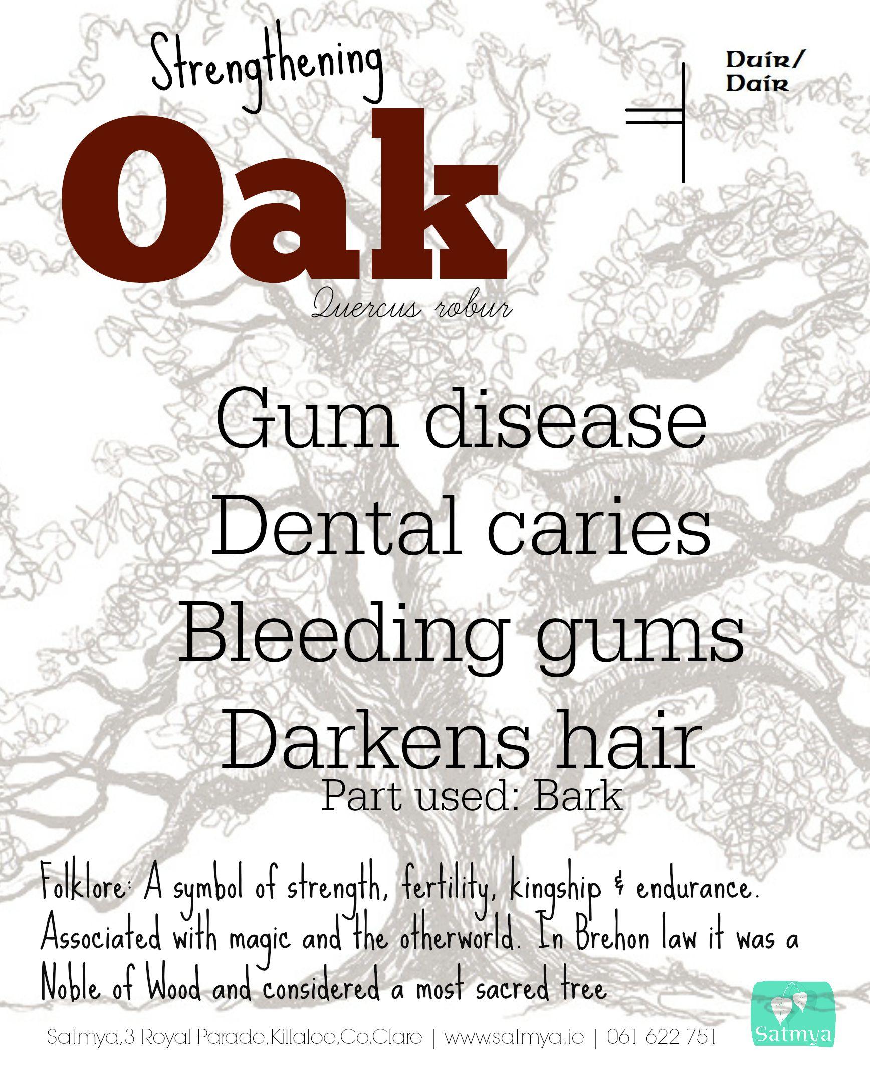 Oak Medicine Gum Disease Bleeding Gums Medicine