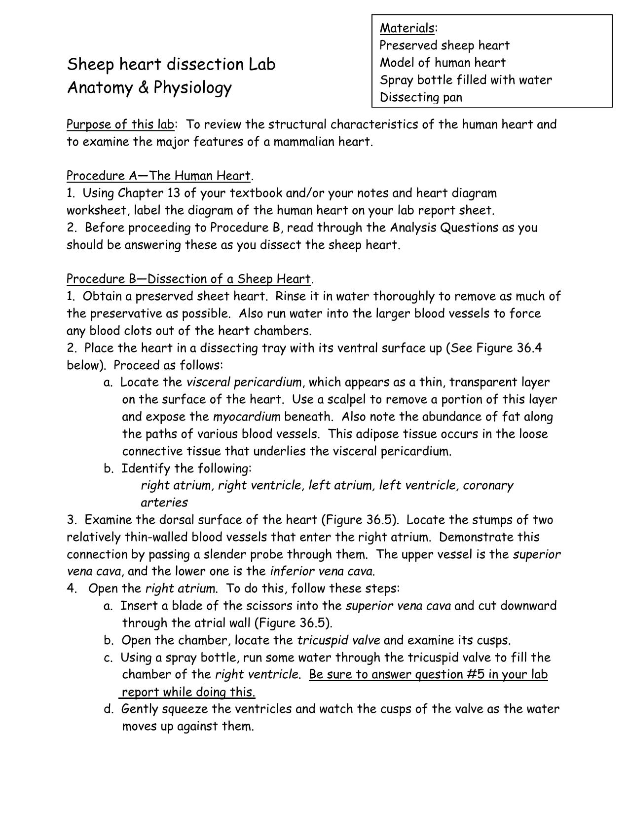Human Heart Worksheet