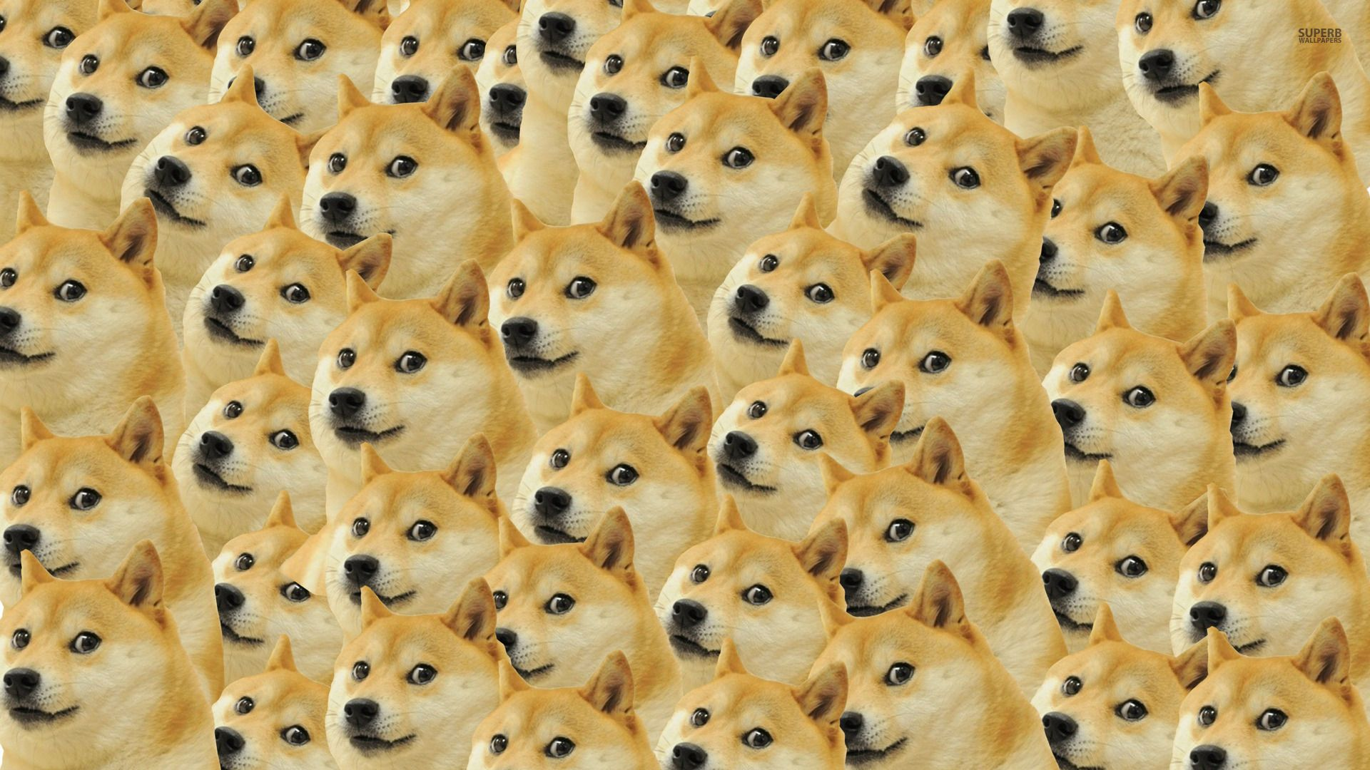 pattern Google Search Doge, Dog pattern, Doge dog