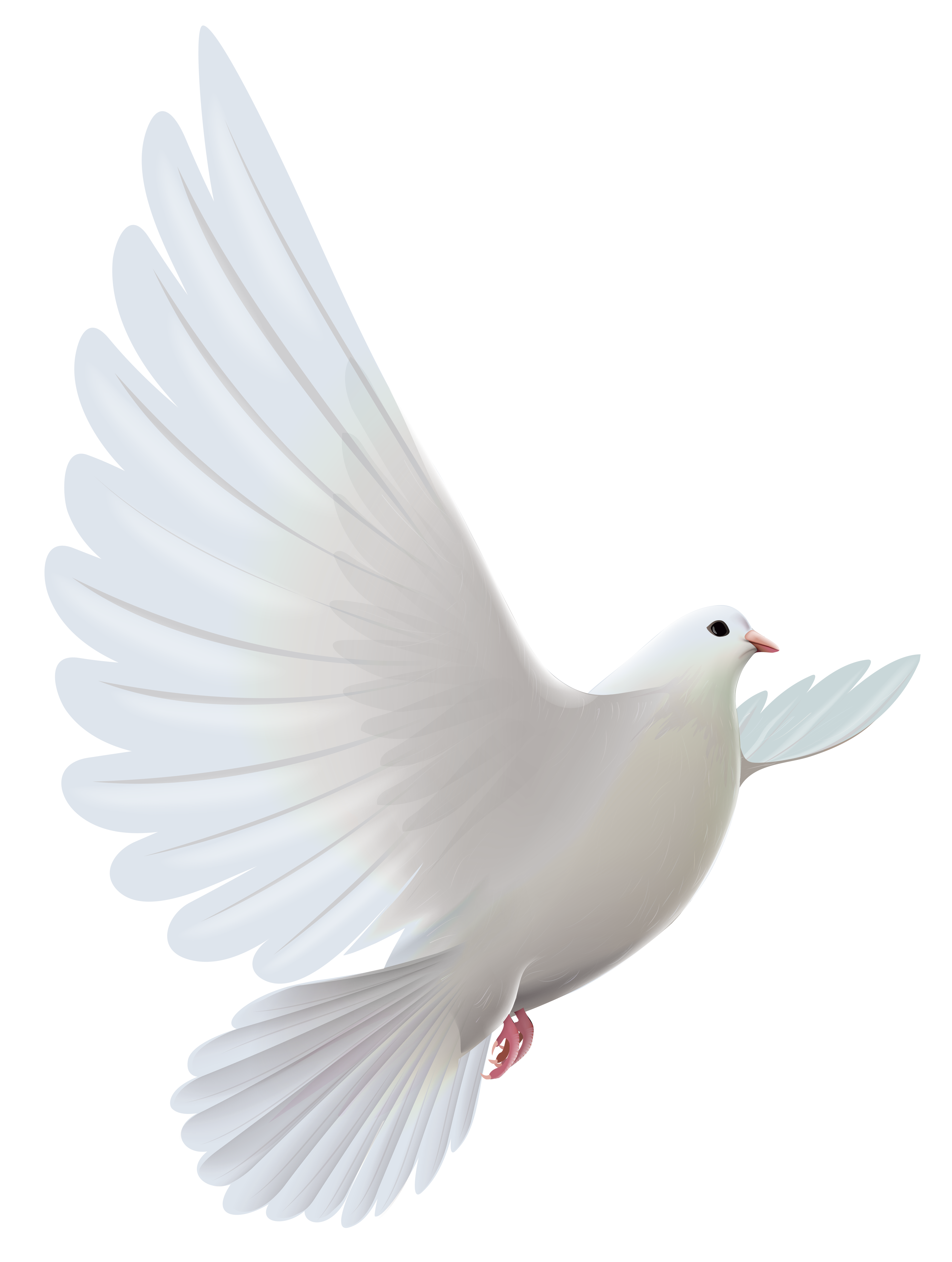 White Dove Transparent Png Clipart Dove Pictures Dove Images Light Background Images