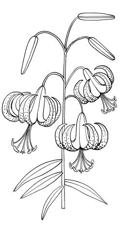 Выкройки и сборка цветов / Декоративные цветы из ткани ...