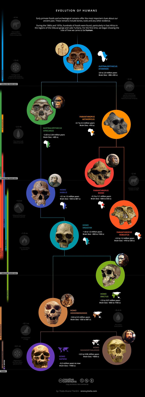 Infographic Human Evolution Via Draw Science