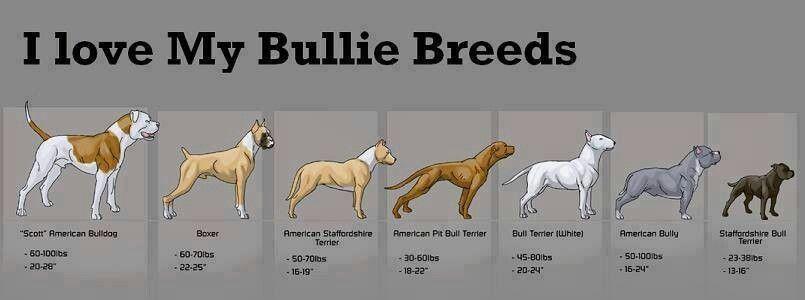 Love My Staffy Doberman Breed Bully Breeds Breeds