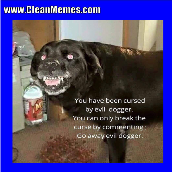 Funny clean dog memes - photo#38