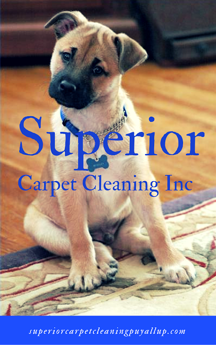 Our experts focus on providing the most thorough Carpet