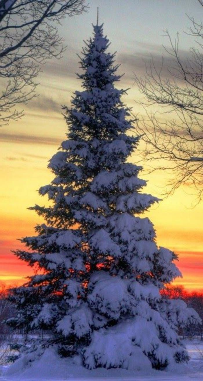 The winter landscape in 80 beautiful pictures   Helde   Le paysage dhiver en 80 images magnifiques  Winter snow background photos mountain snow winter wallpaper backgroun...
