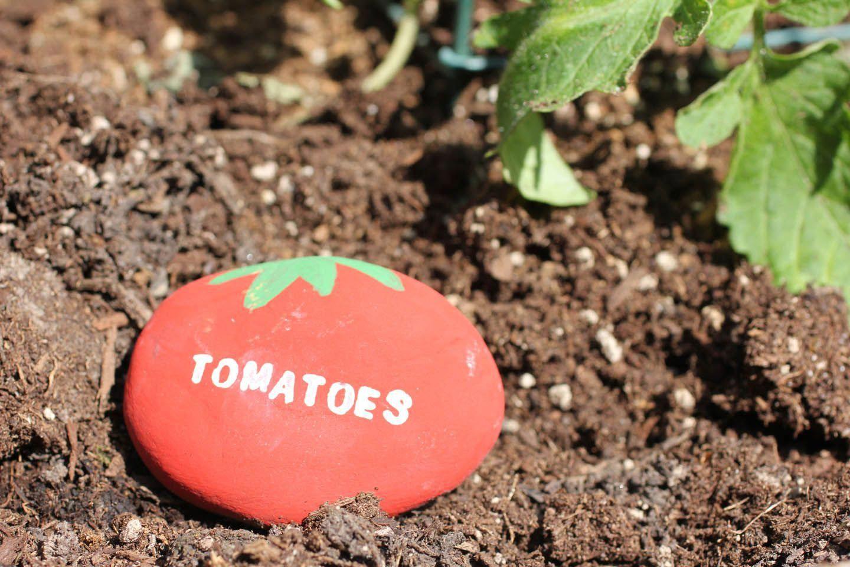 Cute idea for the garden - vegetable garden rock signs ...