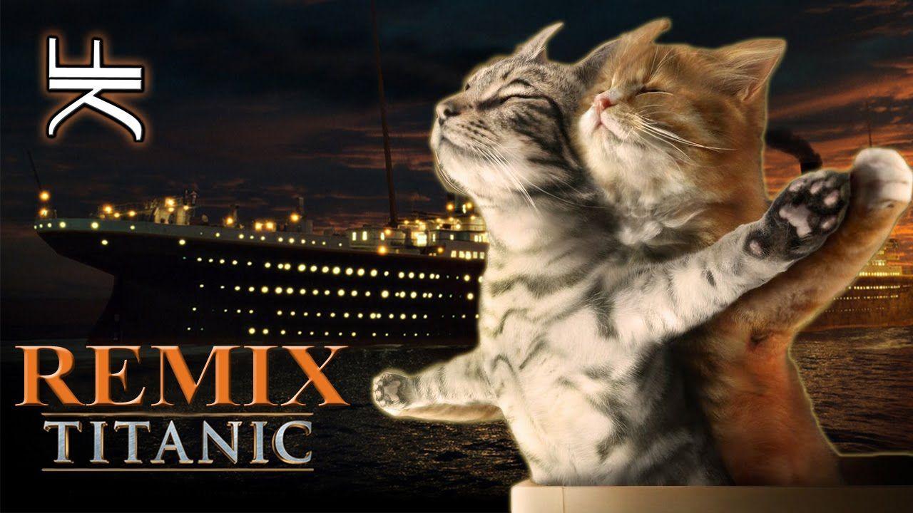 лучшее время, коты титаник фото пружине