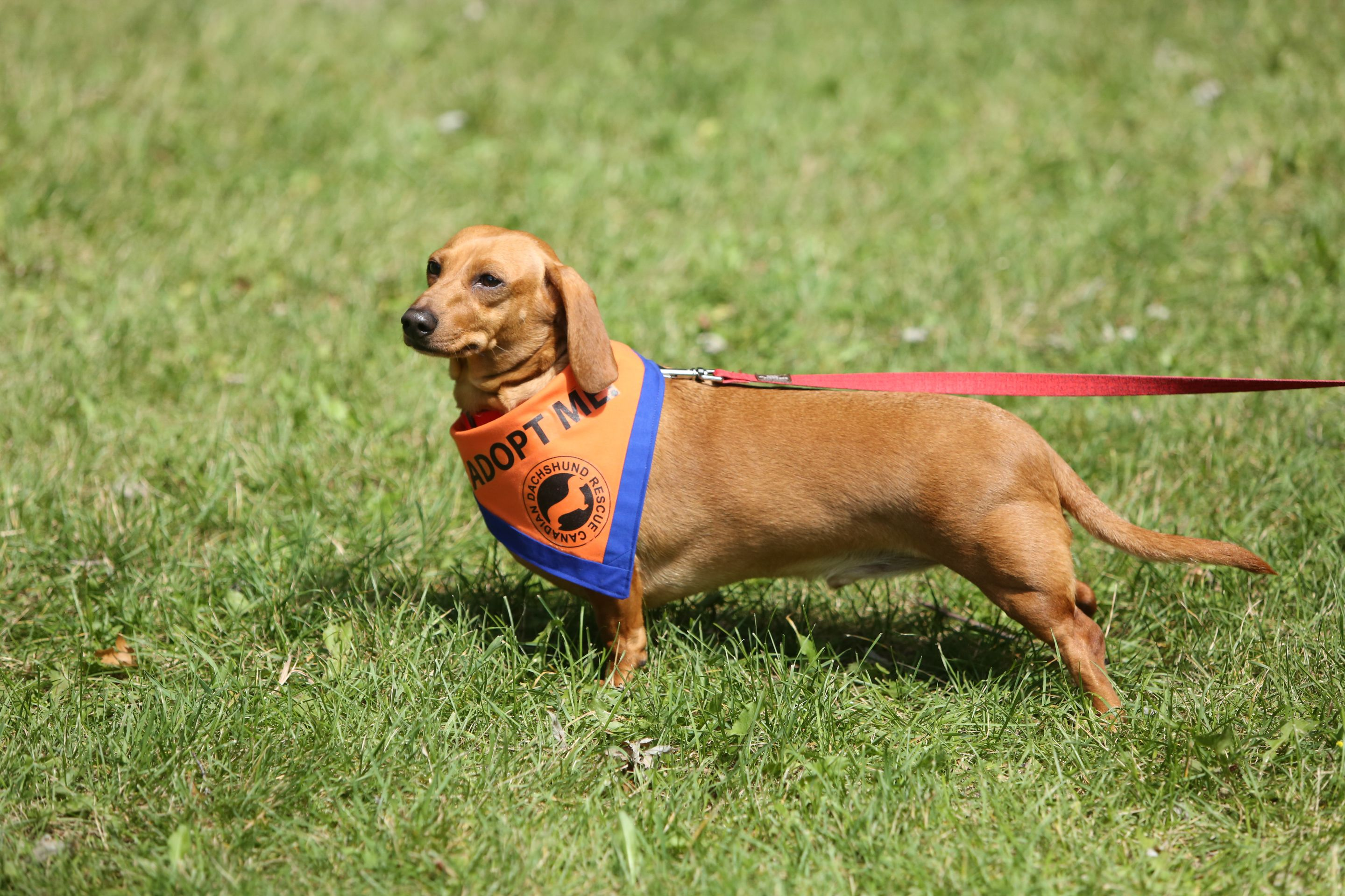 Check Out These Great Photos From This Year S Picnic Wienerdog