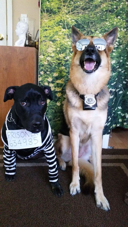 Halloween costumes Dog halloween costumes diy, Dog