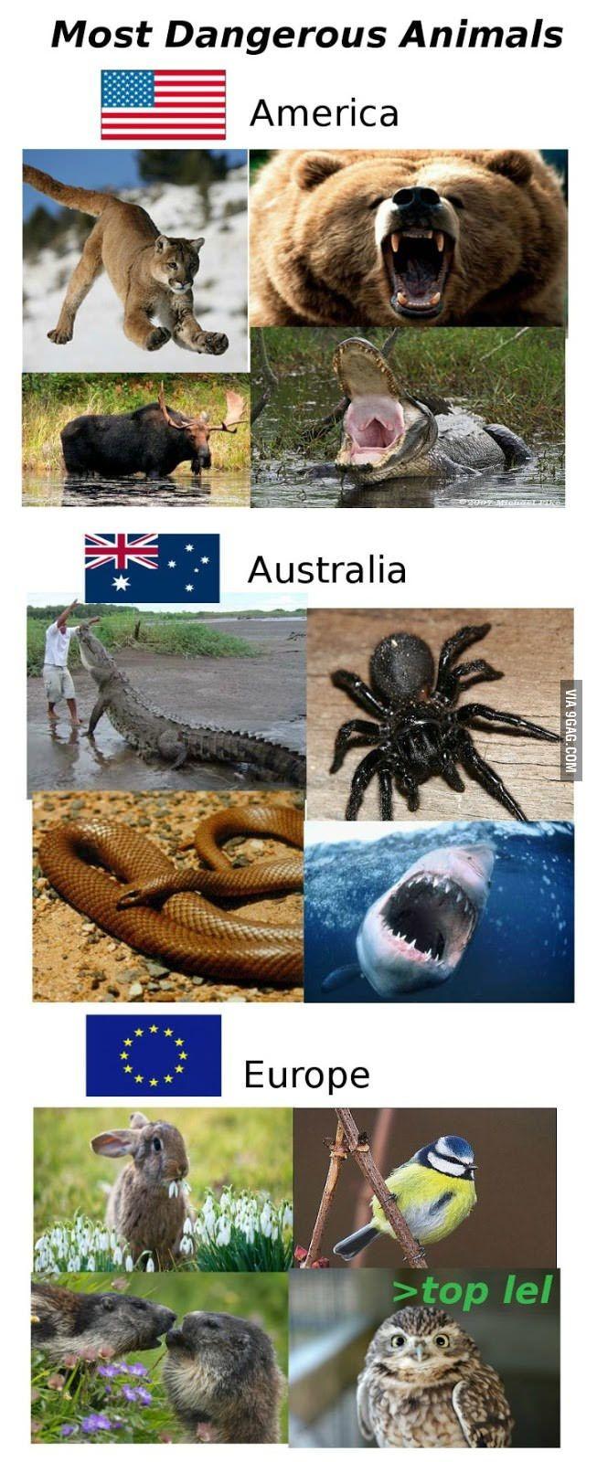 Most Dangerous Animals in... Immagini divertenti, Foto