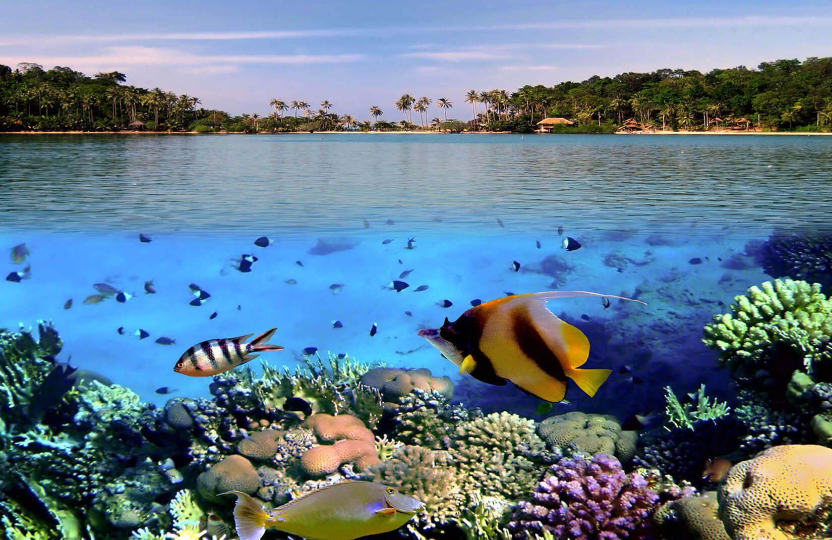 Tropical Sea Level Mural Wallpaper Aquarium Live Wallpaper