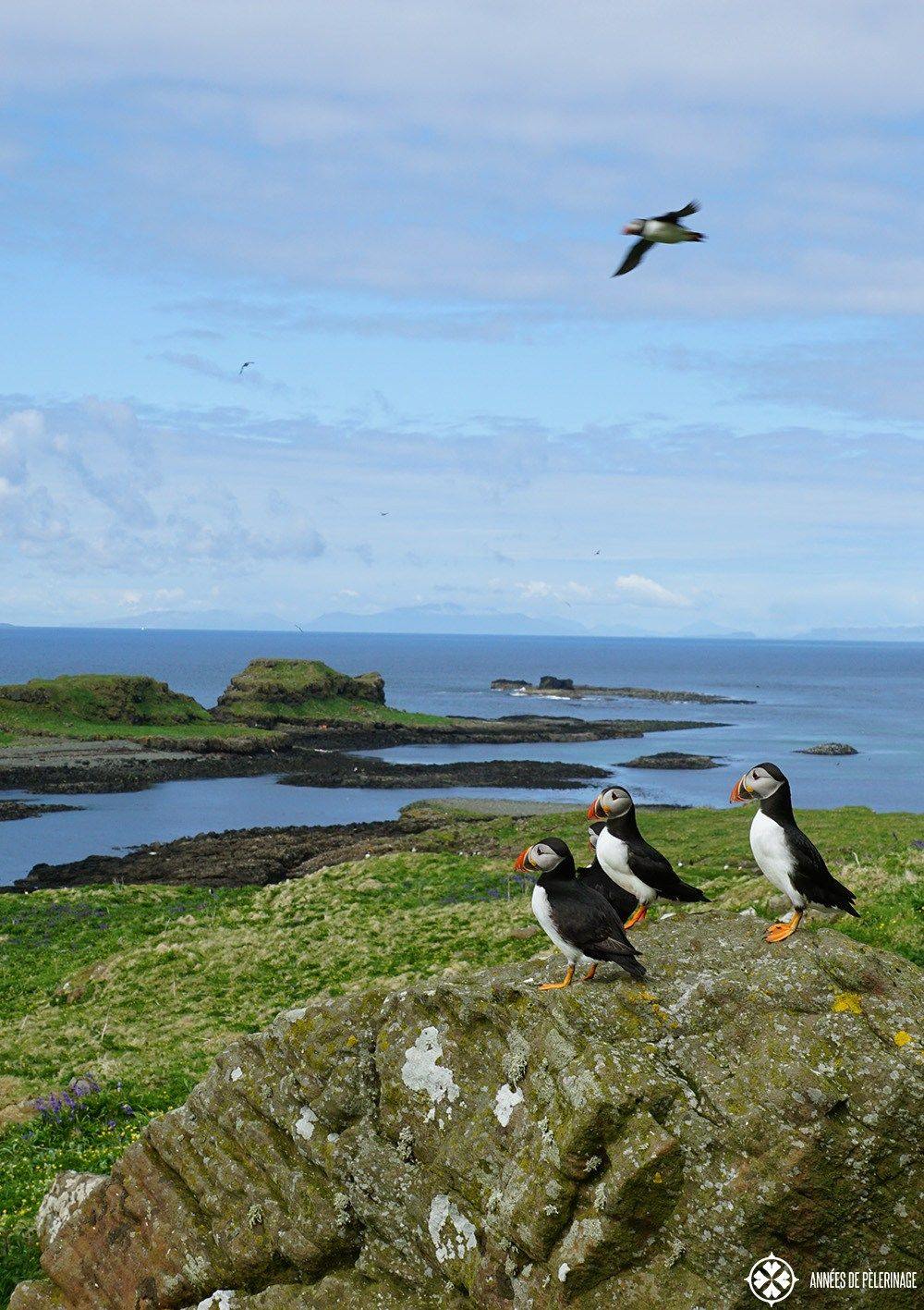 A rock with Puffins on the scottish Island of Lunga