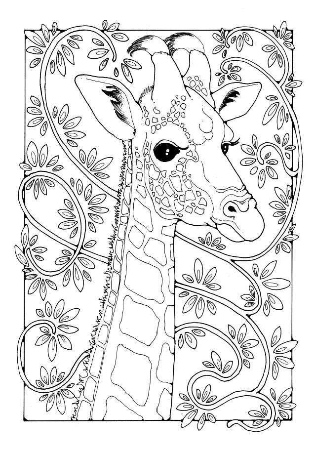 Giraffe : A Colouring Book of Pictures and Patterns (Pictures to ...