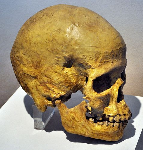 The Skull of Grimaldi Man, dated to the Paleolithic, found near Ventimiglia Italy. Grimaldi Man was a remnant of the pure sapiens that were being replaced by sapiens -neanderthal hybrids (Cro-Magnons) throughout Europe and the Near East. Grimaldi man was paedomorphic and very slight compared to Cro-Magnons being similar to the modern Khoisan/San Bushman people of South Africa.