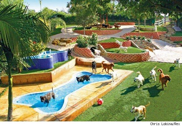 Luxury Dog Resort Google Suchen Niche A Chien Chien Dog Google Luxury Luxury Dog Resort Google Suchen In 2020 Dog Vacations Dog Playground Dog Daycare