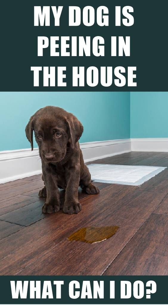 Pin by Monika Hudson on Dogs | Dogs, Dogs peeing in house