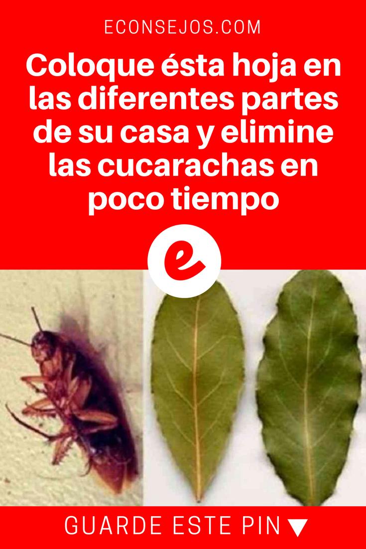 7 Remedios Caseros Para Eliminar Las Cucarachas Y Sus Huevecillos Remedios Para Cucarachas Cucarachas Eliminar Repelente De Insectos Casero