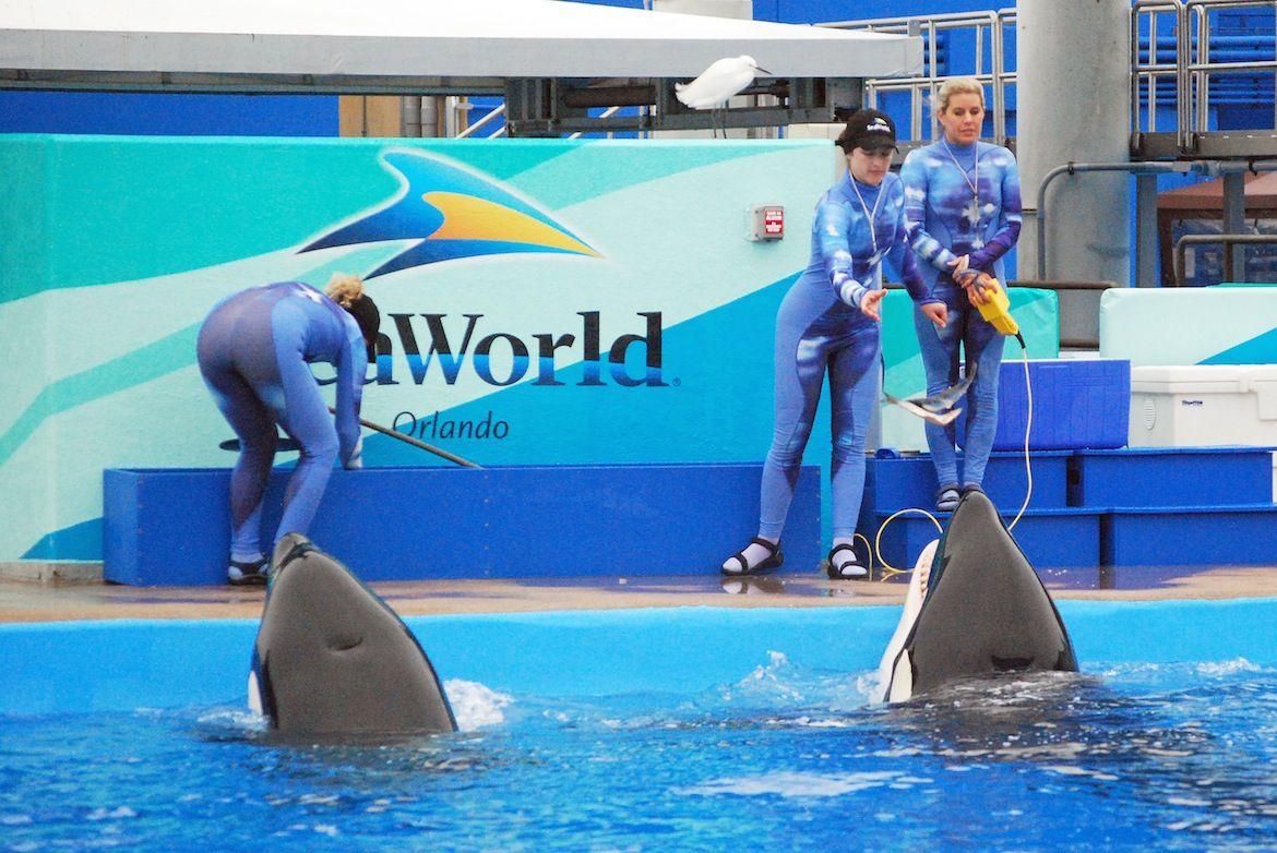 What SeaWorld Should DO  By Mark J. Palmer Associate Director International Marine Mammal Project Earth Island Institute  http://dolphinproject.org/blog/post/what-seaworld-should-do