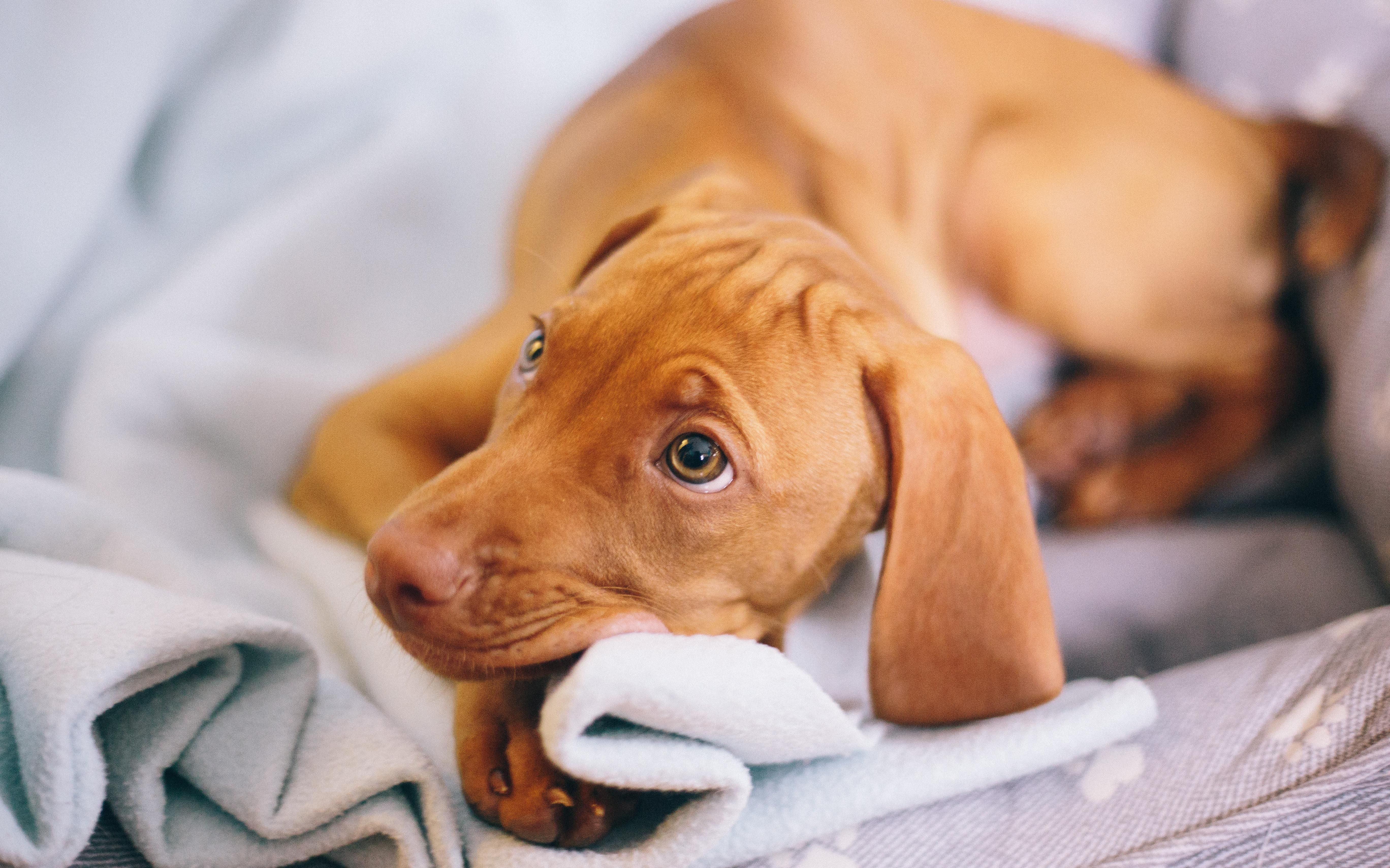 Those Puppy Dog Eyes Dogpictures Dogs Aww Cuteanimals