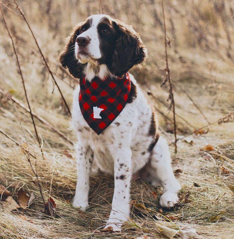 MinnesotaMade_DogBandana_Roman_small.jpg Dog bandana